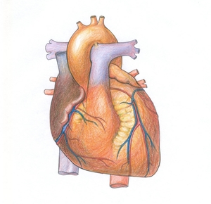 Fluoride and heart disease