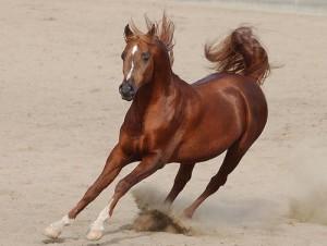 Poisoned Horses