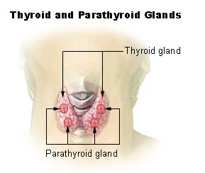 Fluoride reduces thyroid activity
