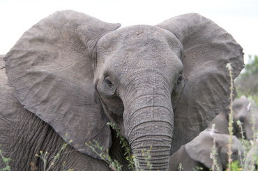 Toronto-Fluorosis-Dead-Elephants